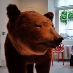Tiergeschichten erzählt im Naturmuseum